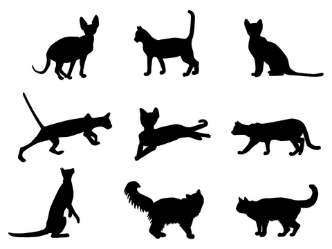 Tattoo Designs on Comments Cat Stencil Kitty Pets Animals Memorial
